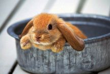 Bunny ♡ / by enny tjiang