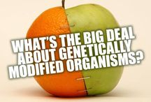 No on GMOS, Monsanto must Go! / by Teri Beyl