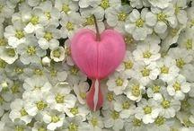 Flowers / by Sofy Cohen de Nacach
