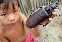 Cool bugs / by Tammy Porath