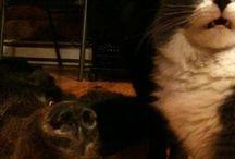 Kitties!!! / by Alison LeGarie