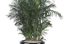 Air Purifying Plants / by National Home Gardening Club