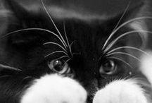 Cat Lover / by Monica Wildenburg