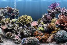 Under the Sea / My dream tank. / by Jennifer Walker