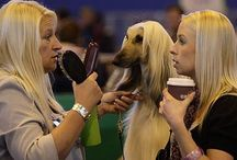 * Doggie Déjà Vu & Dog Look-Alike Contests / by We Love Dogs ♥ Guide Dogs Worldwide ♥