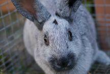 rabbits / by Elizabeth Hutton Comiskey