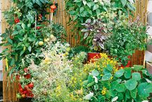 Patio & Container Garden / gardening in containers on my patio / by The Bee