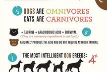 Infographics / by Katie Entrekin