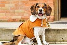 Fall Fashion 2013 / Check out the latest fashion for the fall from Bailey & Bella! / by Pet Valu US