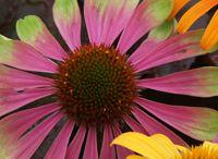 Flowers / by Sabine Gwaltney