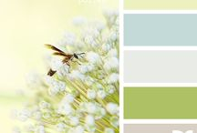 Color Palettes / by Ryan Kokemor