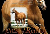 JMK In Reality AQHA PHBA Stallion / Foals / There is a fine line between dreams and reality......... JMK IN REALITY, Consistently Continues to Produce Exceptional Conformation, Outstanding Beauty, Great Mind and the Sprit needed to become your next Golden Champion. 16,1 1400 lbs HYPP N/N Proven producing sire of World Champions, Top 10, Congress, and Futurity Champions. PHBA Reserve World Champion Open & Amateur #1 Honor Roll Stallion Open & Amateur  615 PHBA & AQHA Points  ROM  Special consideration will be given to JMK IN REALITY Returning Broodmares, Champions, Champion Producers and Multiple point earning mares.  Standing at Bridlewood Equestrian Oklahoma. / by Bridlewood Equestrian