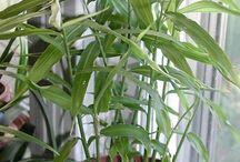 Indoor plants/herbs / by Kristin Freeman
