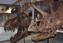 "Dinosaurs & Other Fossils / Dinosaurs: Land animals only such as the Maiasaura, Albertosaurus, Apatosaurus, T-Rex  Saurischians ('lizard-hipped') are distinguished from the ornithischians ('bird-hipped')  Pterosaurs-Flying Reptiles,Sordes,later the Quetzalcoatlus  and then the   Marine reptiles such as the Plesiosaurs, Pliosaurs, Nothosaurs, Ichthyosaurs and Mosasaurs, ... This ""dawn swimmer"" was one of the first mosasaurs / by Pamela Brandvold"