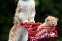 Cute Overload Animals! / by Megann Zabel
