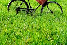Bicycles / by Nancy