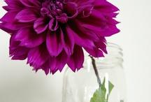 Laura / by Dandie Andie Floral Designs