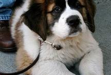 Puppa dogs & cutie piez  / Animals / by Krystin