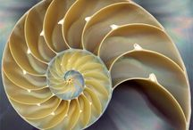 Fibonacci Inspiration / E-dens Inspired by the great designs in Nature / by E-den Camping