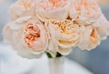 Flowers  / by Josie Robino-Bruno