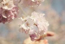 Spring / by Andrea Alletto