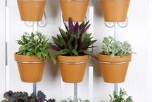 Plants / by Meghan Eisberg