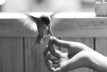 BirdieStuff / by Marissa Aschinger
