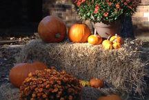 Fall yard decorations  / by Judy Barrington
