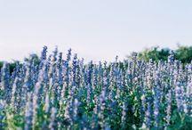Flowers / by Iesha Bush