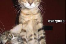 Things that make me laugh when I'm grumpy / by Kelly Pozzoli