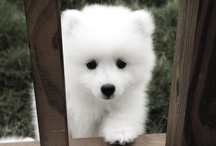 it's soo FLUFFY!!!! / by Caroline Driscoll