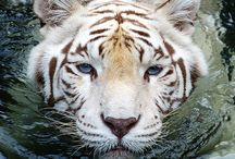 Amazing Animals / by Brie Parell