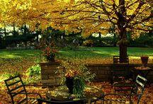 Autumn / by Jesika Anne