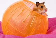 Small Pet Articles from Pet Care Corner / by PetSolutions Pet Supplies