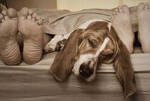 Bassett hounds!! / by Karen Crick