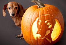 Halloween / by Nikki Gilbert