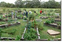 Community gardening / by Sarah Gormley