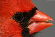 Bird Gallery by Bryan Carnathan / Images of our Feathered Friends / by The-Digital-Picture.com