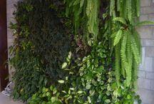 mural-parede-painel-quadro de plantas / Além da beleza o Quadro Vivo tem muitas vantagens.... -Reduz a poluição sonora e visual (além de evitar pichações em muros) -Reduz a poluição do ar -Economiza água (sistema reutiliza água da própria rega) -Reduz a temperatura do ambiente (economize no ar-condicionado!) -Baixo impacto ambiental -Fácil manutenção / by Zoy Maria