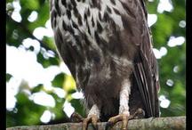 Bird of prey  / by Kyle Boyer