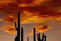 Desert Beauty / by Annie Sorenson