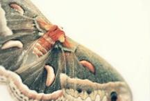 Moths / by The Tiny Card Company