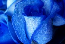 Blue / by Cindy Wright