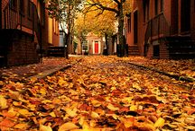 Fall Back...... / Autumn     / by Sharon Cupelli