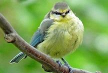 Chubby Bird Obsession / by Kay Demonbren