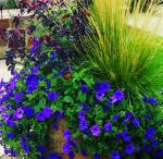 Flowers & gardening ideas / by Becky Hormuth