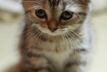 Yes, I'm a crazy cat lady! / by Stephanie Vampola