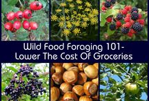 Wild Foraging / by Cheryl Mitchell