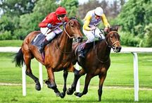 Horse Racing / by william king