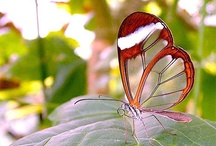 Butterflies, Dragonflies & Bugs / beautiful nature / by Collette Wilson